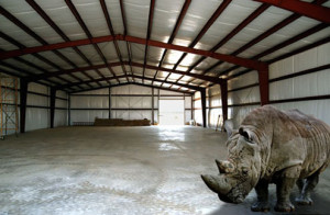 RHINO Steel Prefab Buildings Frame with a Rhino inside it