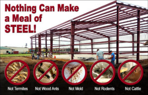 Nothing can make a meal of a metal barn kit, not termites, wood ants, rodents, mold or even cattle.