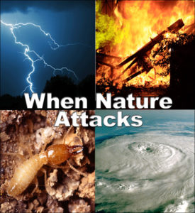 Collage of natural enemies of wood buildings: lightning, fire, hurricanes, and termites.