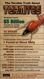 RHINO Termites infographic