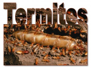 A gorged, creepy close-up of a termite queen surrounded by tiny worker termites