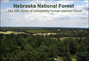 Arial photo of the Nebraska National Forest- 142,000 acres of completely human-planted forest