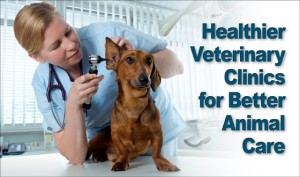 "Photo of vet examining a dachshund's ear with the headline ""Healthier Vet Clinics for Better Animal Care"""