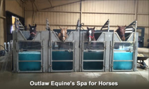 Horses stand in whirlpool baths at this horse barn spa in Texas.
