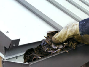 photo of a person cleaning debris from a metal building gutter.