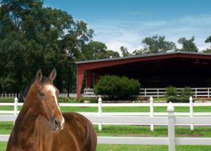 Photo of a horse standing near a open-air steel riding arena.