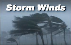 Palm trees bending in fierce hurricane winds